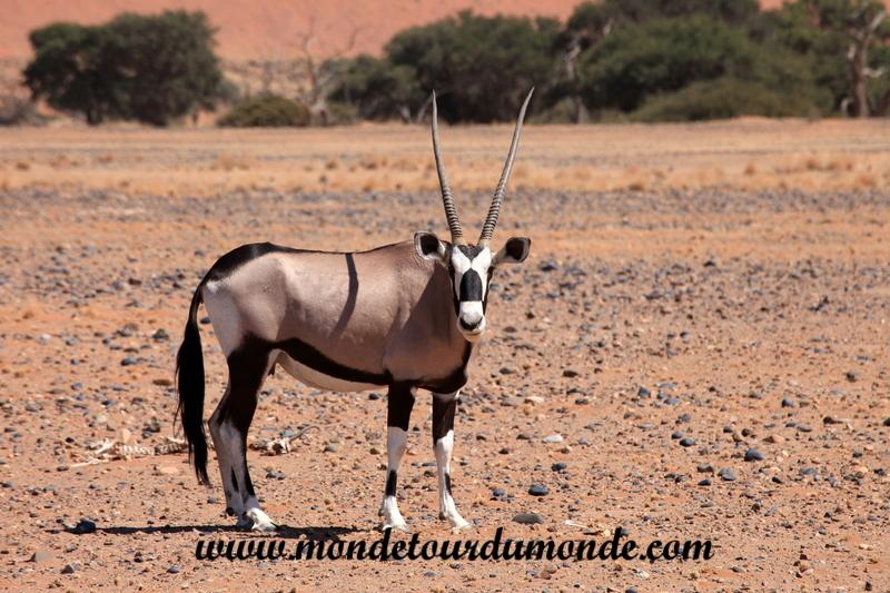 Désert de Namib (161)