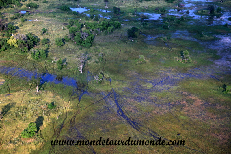 Okavango (19)