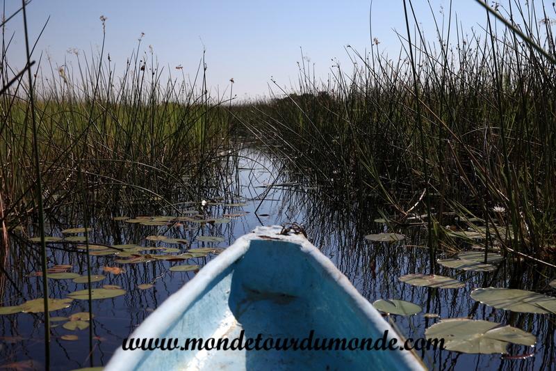 Okavango (76)