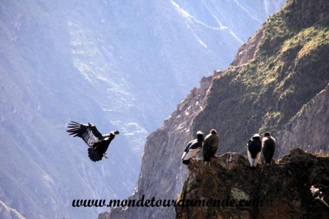 Colca Canyon (37).JPG
