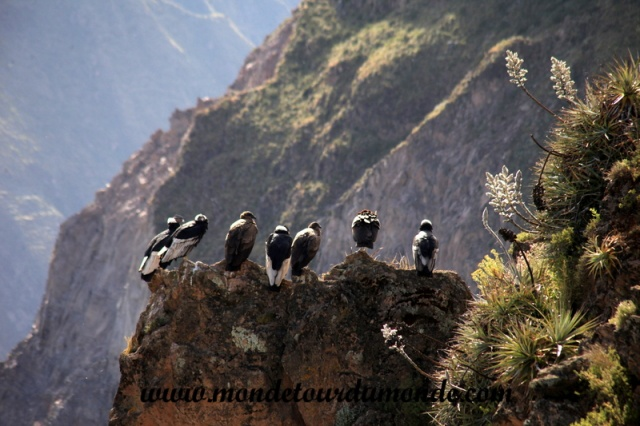 Colca Canyon (43).JPG