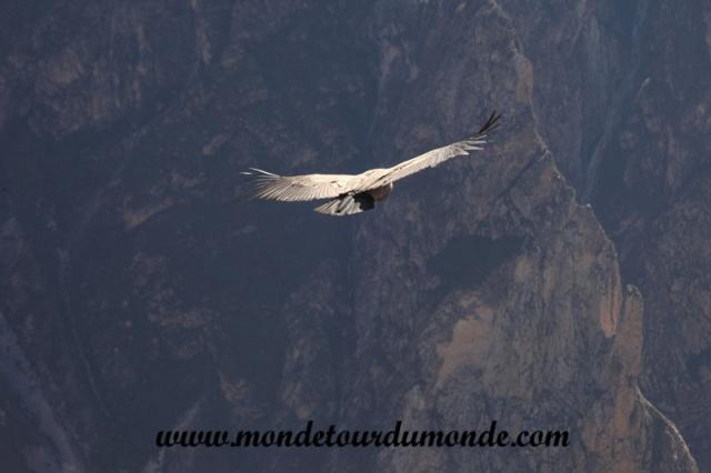 Colca Canyon (85).JPG