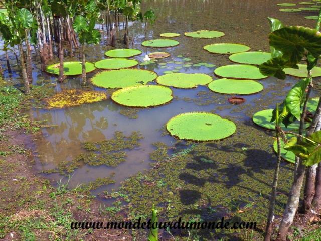 Iquitos (144).JPG