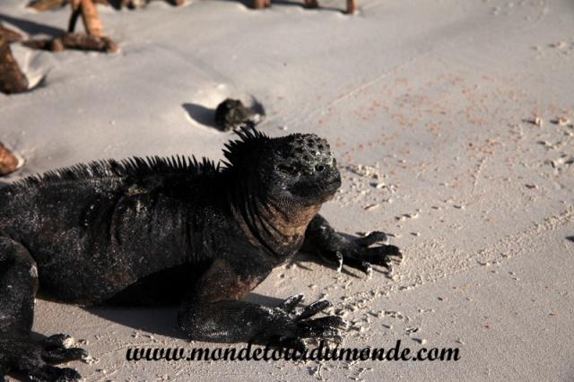 Galapagos (35).JPG