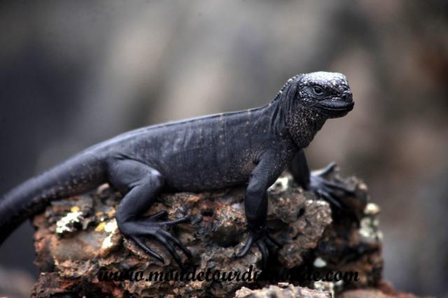 Galapagos (312).JPG