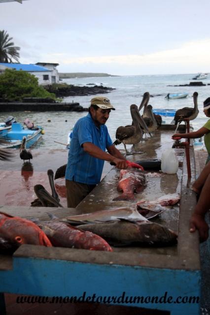 Galapagos (386).JPG
