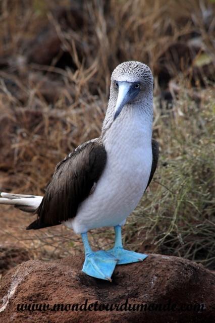 Galapagos (412).JPG