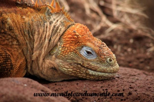 Galapagos (437).JPG