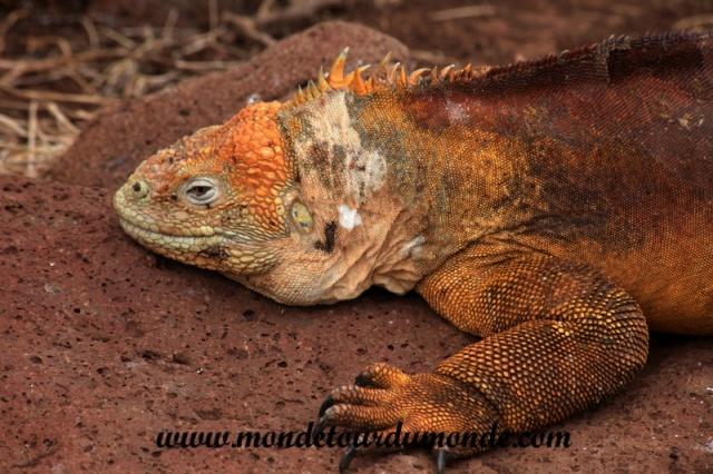 Galapagos (442).JPG