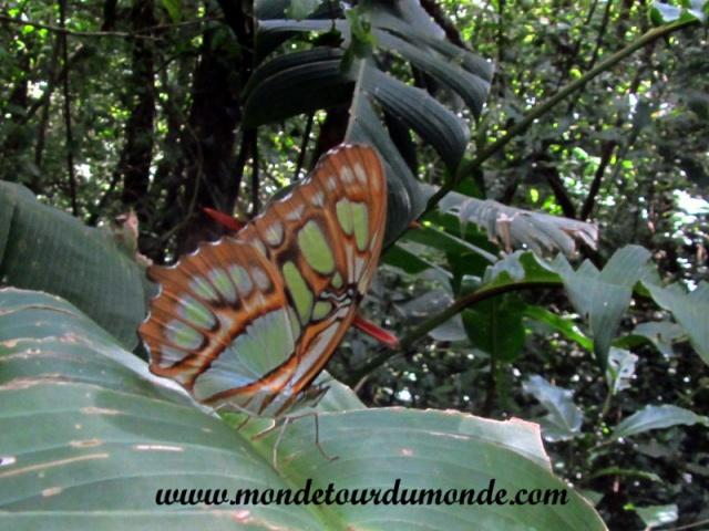 Monteverde (1).JPG