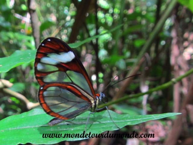 Monteverde (12).JPG