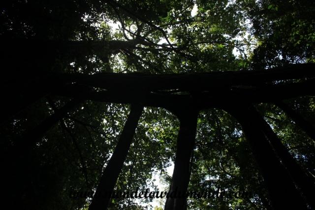 Monteverde (18).JPG