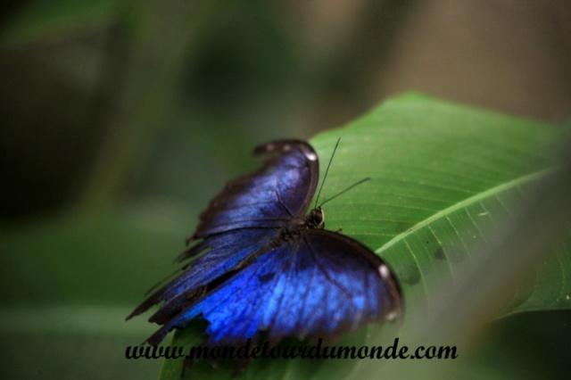 Monteverde (38).JPG