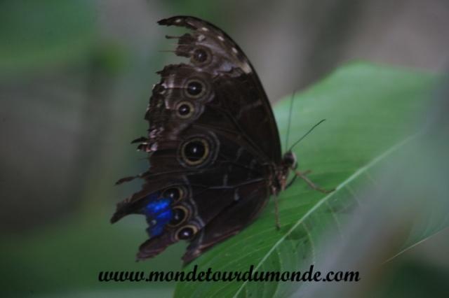 Monteverde (41).JPG