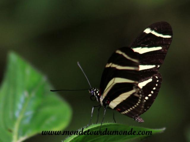 Monteverde (45).JPG