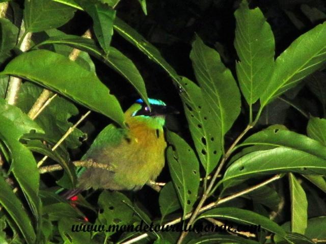 Monteverde (162).JPG