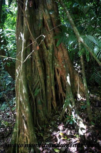 Palenque (37).JPG