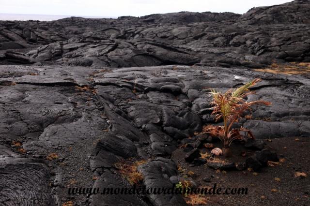 Volcanoes Park (62).JPG