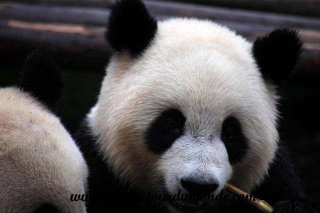 Chengdu (13).JPG
