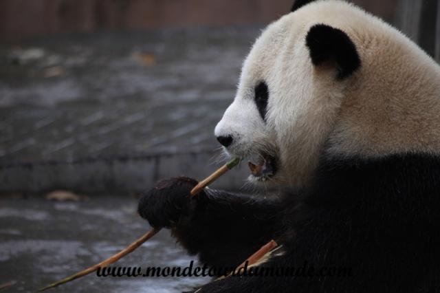 Chengdu (33).JPG