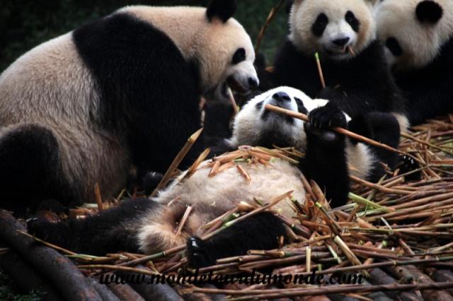 Chengdu (8).JPG