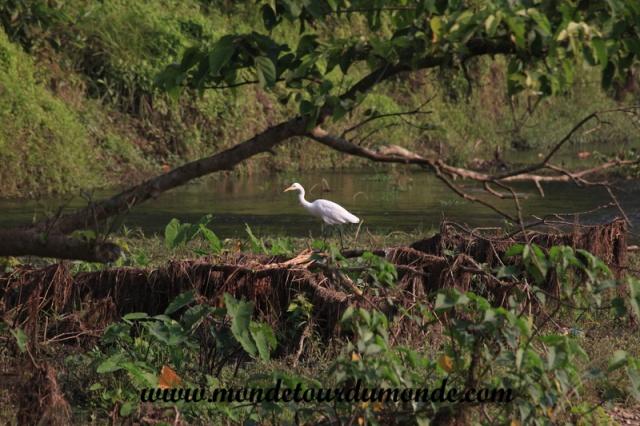 Chitwan (17).JPG