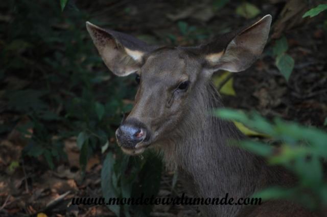 Chitwan (21).JPG
