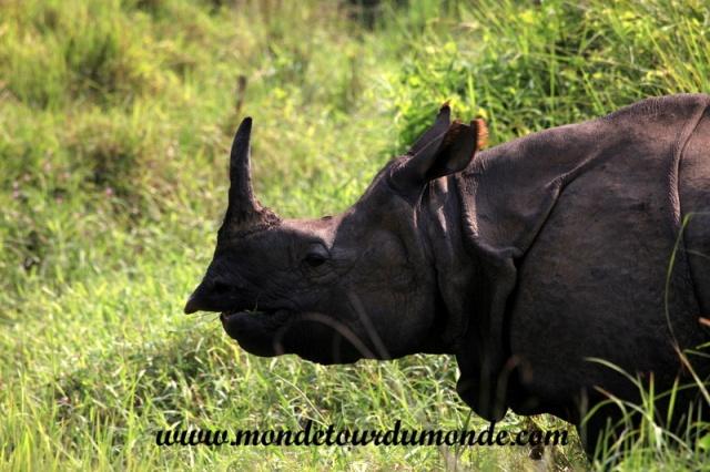 Chitwan (32).JPG