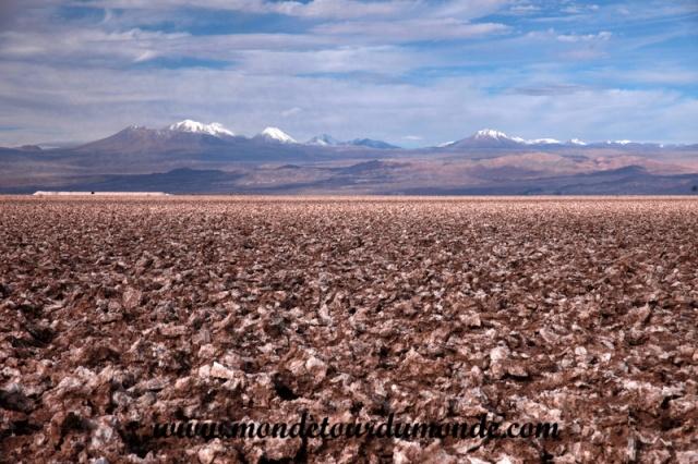 Atacama (34).JPG