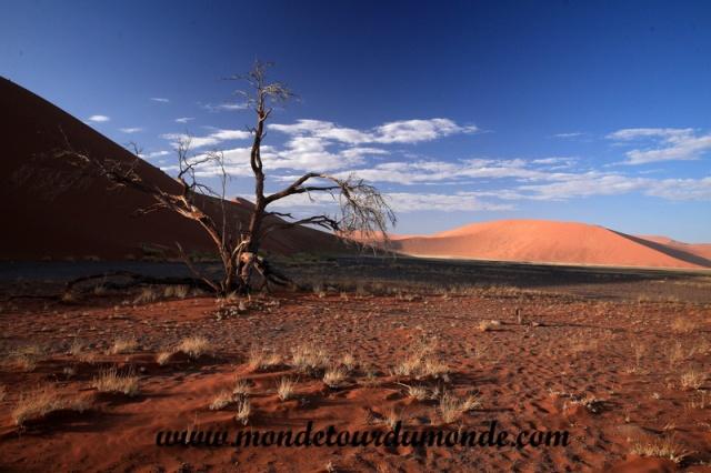 Désert de Namib (107).JPG