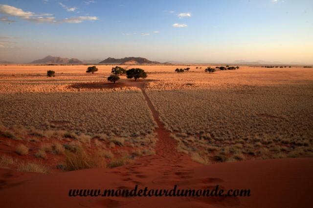 Désert de Namib (174).JPG