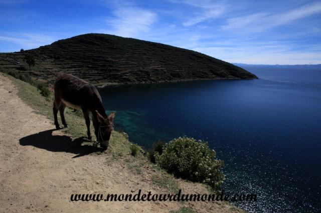 Lac Titicaca (16).JPG