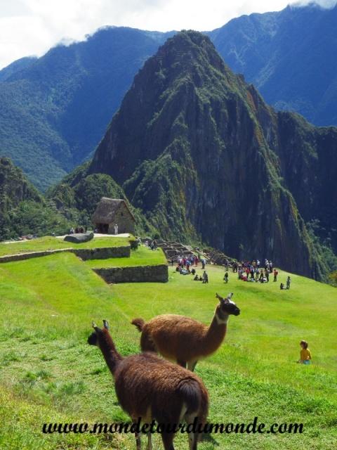 Machu Picchu (97).JPG
