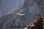 Colca Canyon (49).JPG
