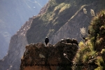 Colca Canyon (14).JPG