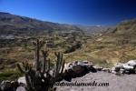 Colca Canyon (146).JPG