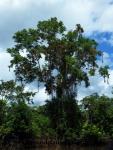 Iquitos (81).JPG