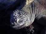 Galapagos (28).JPG