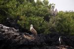 Galapagos (289).JPG