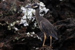 Galapagos (295).JPG