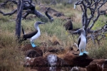 Galapagos (396).JPG