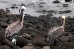 Galapagos (484).JPG