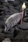 Galapagos (485).JPG