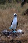 Galapagos (402).JPG
