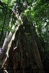 Monteverde (92).JPG