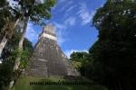 Tikal (33).JPG