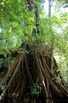 Palenque (64).JPG