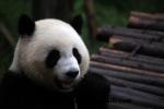 Chengdu (10).JPG