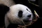 Chengdu (12).JPG