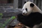 Chengdu (38).JPG